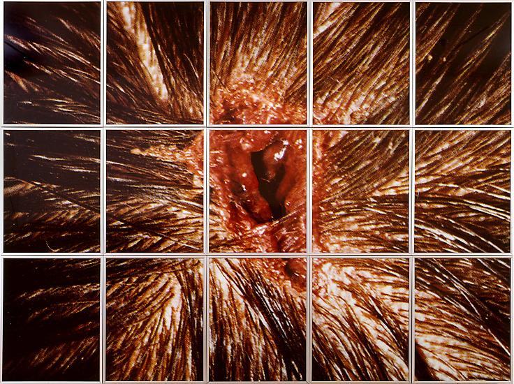 Mat COLLISHAW Bullet Hole 1988 / 1993 Cibachrome m...