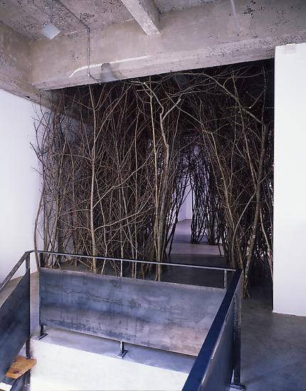 Olafur ELIASSON The forked forest path 1998 Branc...