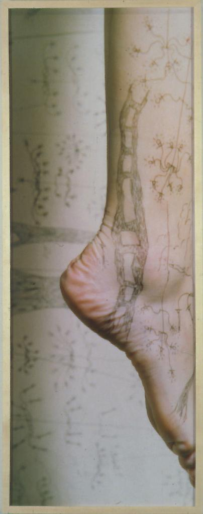 SANDRA CINTO Untitled 1999 Color photograph 50 x 1...