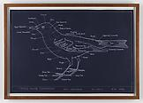 Mark DION Typical Avian Topography/Chart I 2000 si...