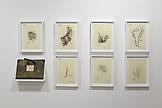 Mark DION Herbarium 2007-2011 Hand painted acrylic...