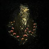 Mat COLLISHAW Insecticide 28 2012 c-type photograp...