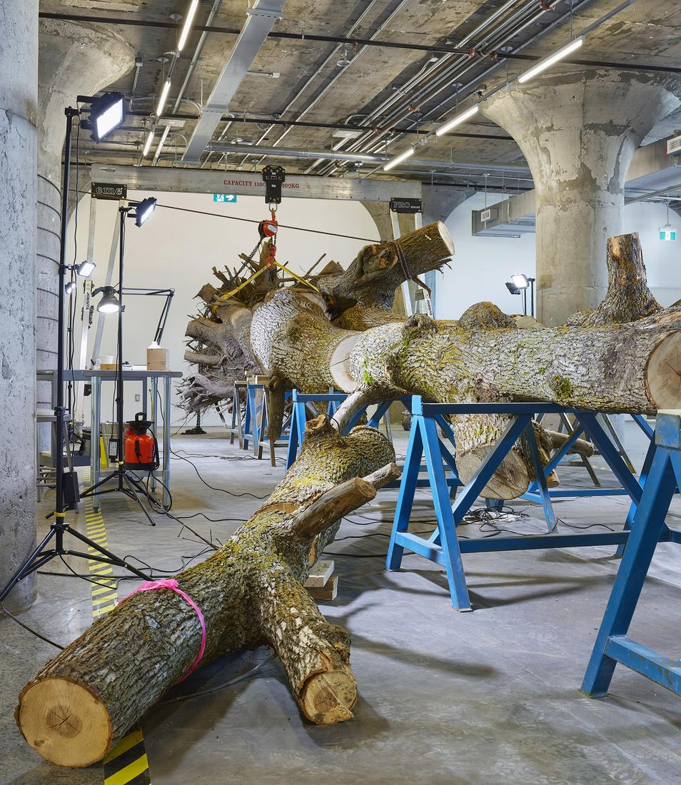 May 23 — July 30, 2019 - Museum of Contemporary Art, Toronto - Mark Dion: The Life of a Dead Tree -  - Exhibitions
