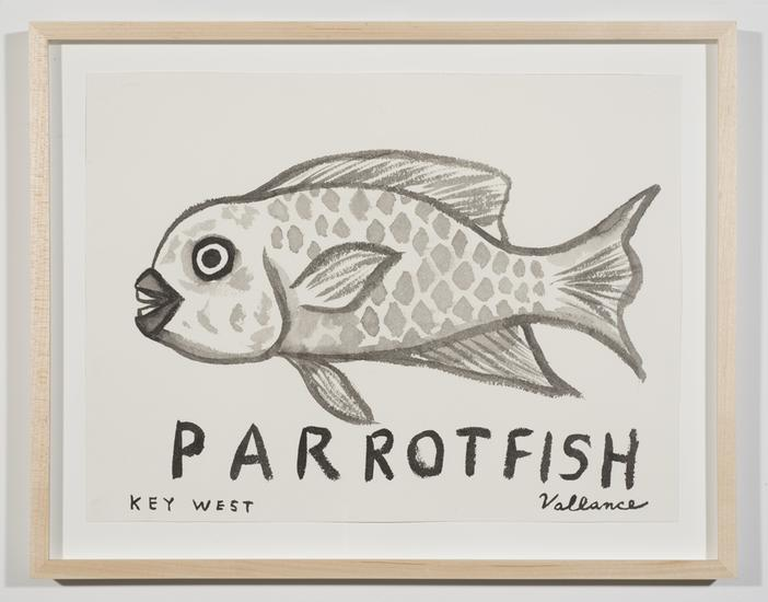 Key West Grinning Parrotfish 2013 ink on paper 12...