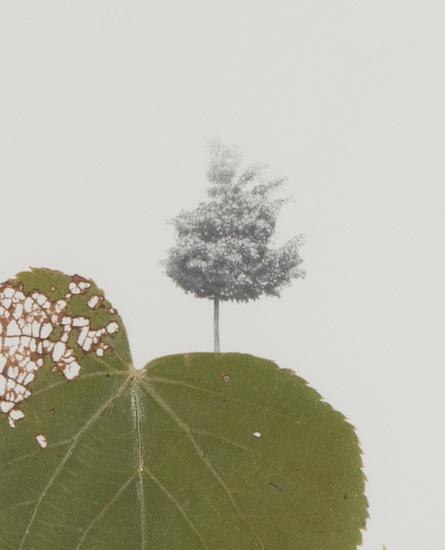 Peggy PREHEIM Linden Tree (detail) 2013 mixed medi...