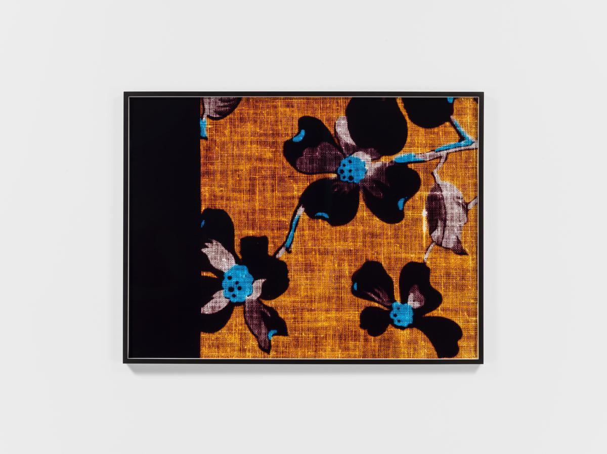 Lisa Oppenheim Remnant (Apple Blossoms) 2017 c-pri...