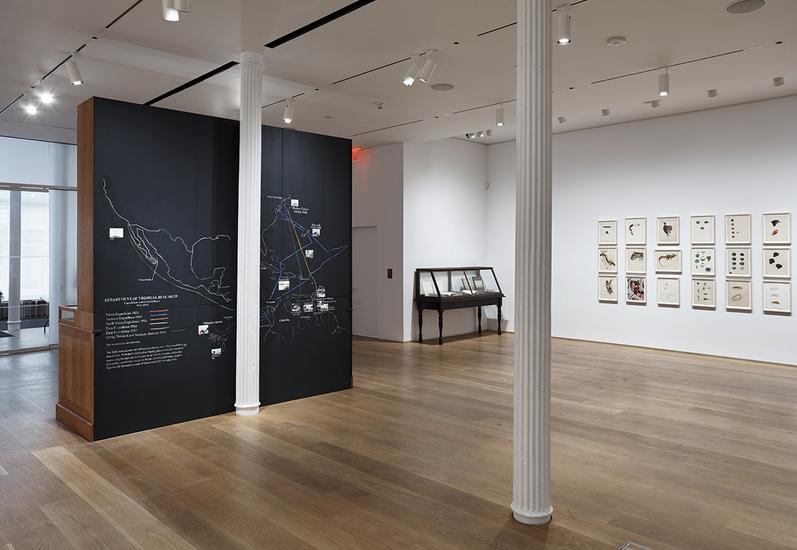 14 April - 16 July 2017 - The Drawing Center - Mark Dion: Exploratory Works: Drawings from the Department of Tropical Research Field Expeditions - Exhibitions