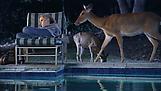 Teresa HUBBARD / Alexander BIRCHLER House with Poo...